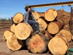 The selection of of the biggest trees available helps produce the most dramatic live edge furniture